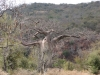 baobab-country