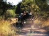 Game drives from Buffelshoek