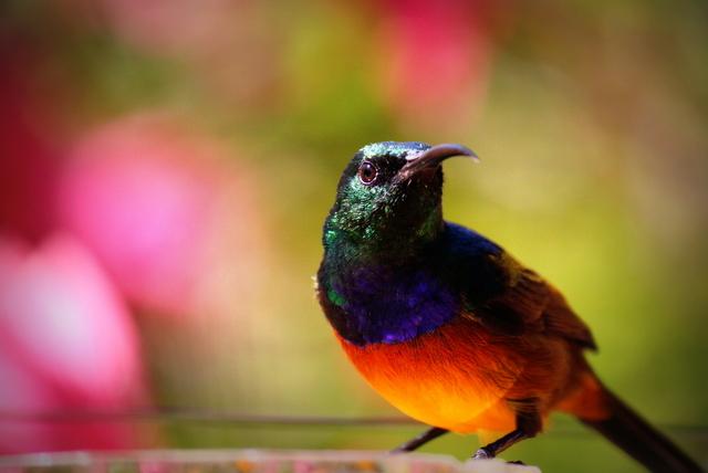 <strong>BIRD WATCHING</strong>