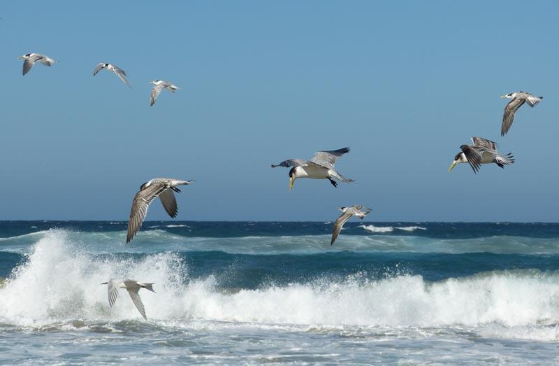 simons town birds