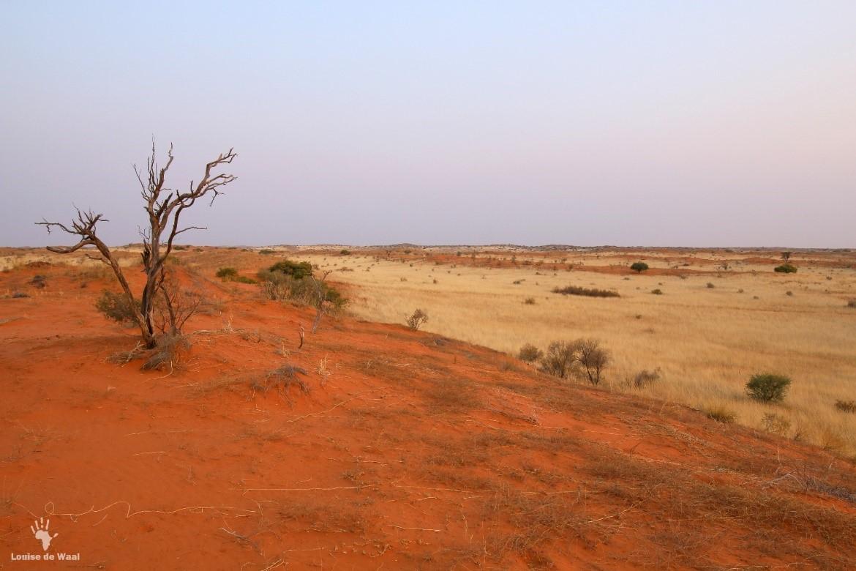 kgalagadi landscape