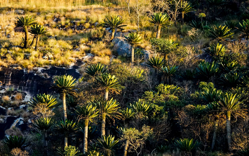 cycad reserve